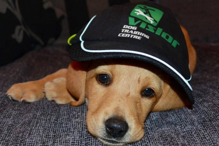 Dog with Vislor hat