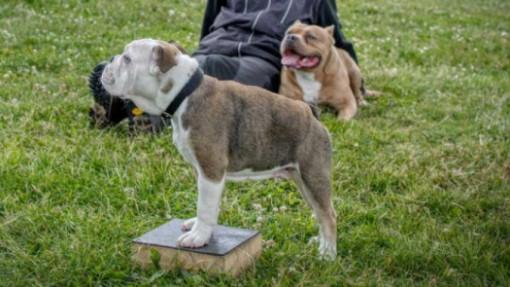 puppy residential training school