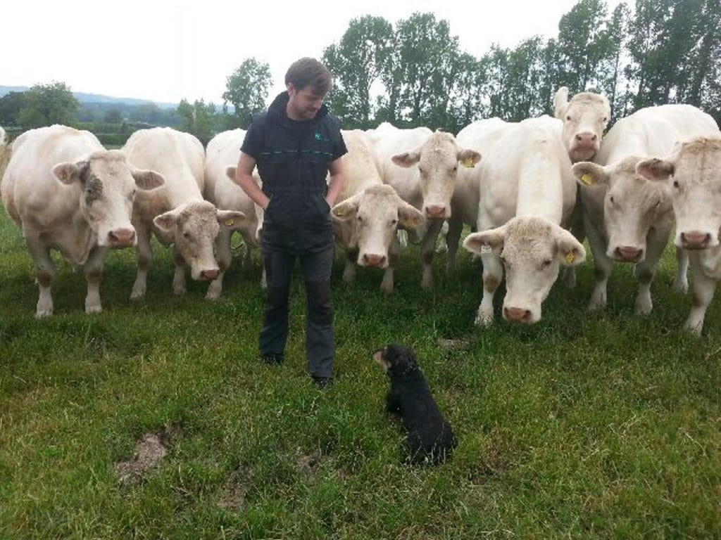 dog and trainer obediently sitting with farm animals