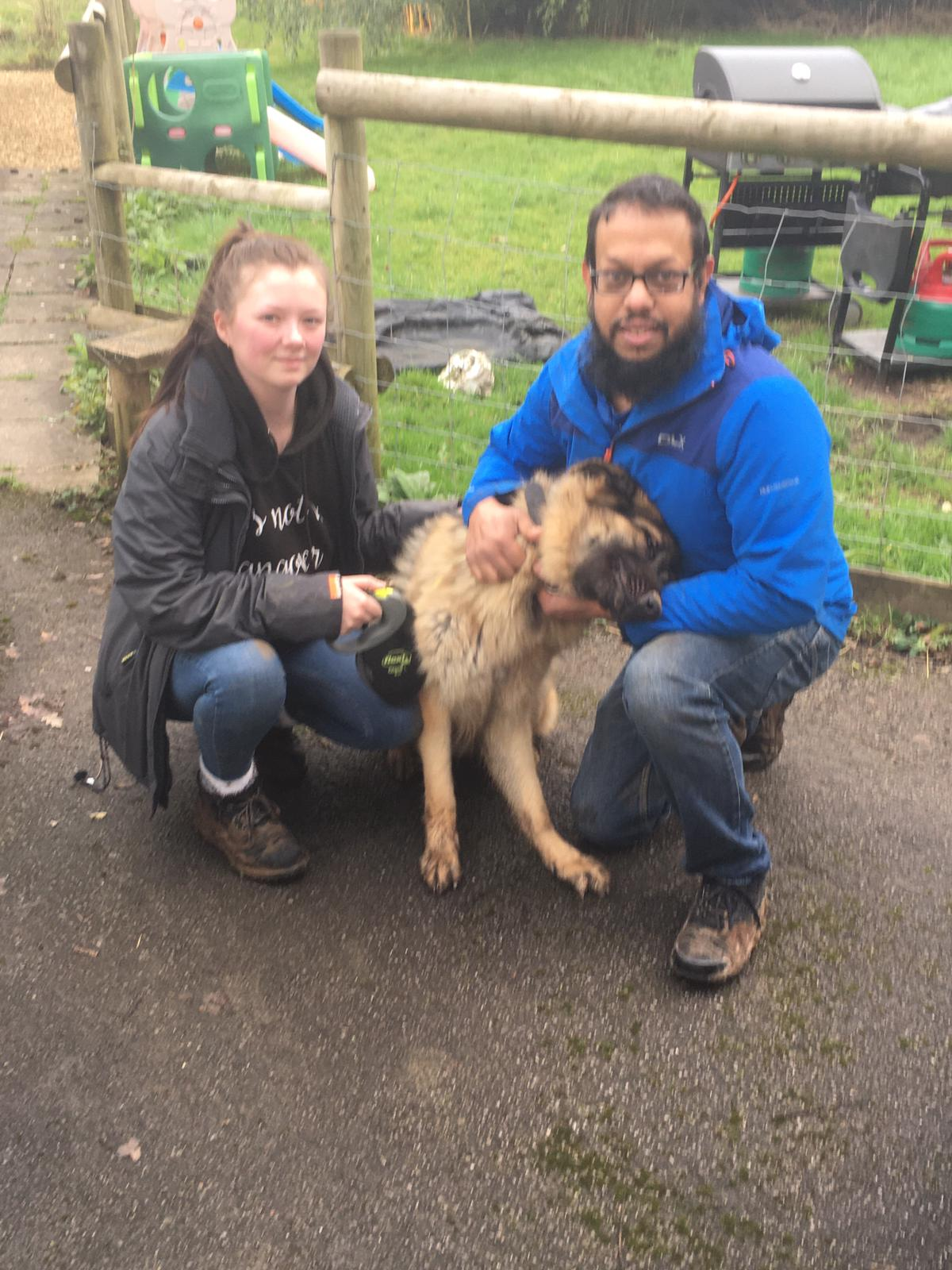 ted gsd dog training handover