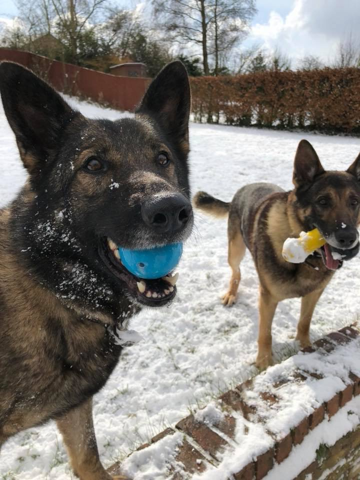 Vislor pre-trained dogs Amos & Assey