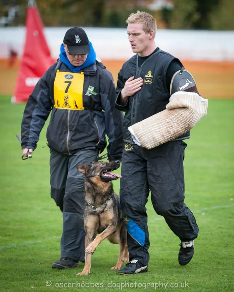 Gilly German Shepherd Dog in training at Vislor