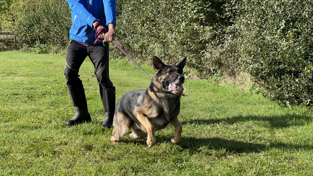 Reactive dog pulling on lead
