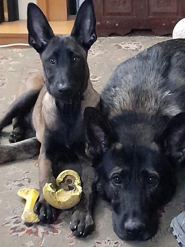 Sighir Khan & Sog at Vislor Sport Dog Training